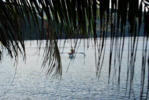Puraran palm tress by the ocean