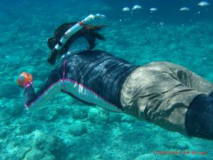 Ethos English school cebu activites snorkeling